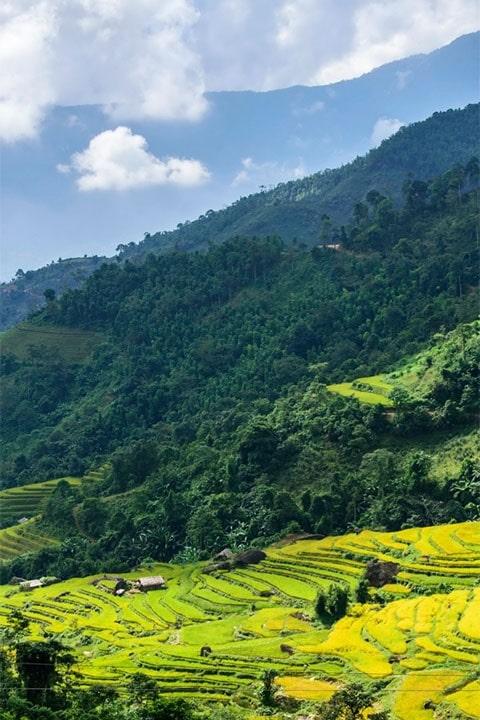 Чайная плантация поселок